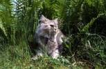 Thumbnail Domestic cat