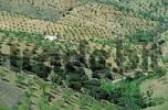 Thumbnail Sierra de Las Estancias almond trees Andalucia Province Almeria Spanien