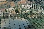 Thumbnail Sierra Morena Olive plantation Andalusia Province Jaen Spanien