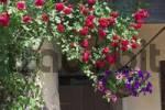 Thumbnail Flowers - Stara Fuzina -Triglav National Park - Slovenia