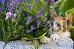 Thumbnail European shorthair cat with flowers