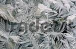 Thumbnail ice crystals