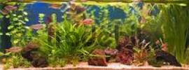 Thumbnail freshwater aquarium