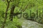 Thumbnail channel of river Triesting Leobersdorf Lower Austria Austria