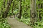 Thumbnail way in wood near Leobersdorf Lower Austria Austria