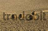 Thumbnail Big bales of straw lying in a harvested field