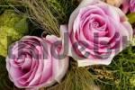 Thumbnail Two pink roses