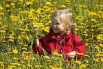 Thumbnail Little girl with a blowball sitting in a meadow