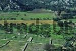 Thumbnail Mallorca Serra de Tramuntana fields near monastery Lluc