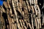 Thumbnail cork bark Andalusia Spain