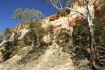 Thumbnail Red cliffs with Eucalyptus trees and pine trees, Paringa, Riverland, South Australia