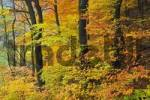 Thumbnail a beutiful colored forest in autumn