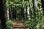 Thumbnail deciduous forest path Germany