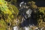 Thumbnail spring - Tyrol - Austria
