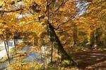 Thumbnail autumnal forest path - beeches - Isar near Munich - Bavaria - Germany