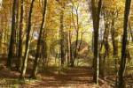 Thumbnail autumnal forest path - beeches - Bavaria - Germany