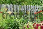 Thumbnail Garden fence with colorful flowers in the foreground
