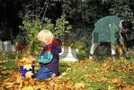 Thumbnail Two-year-old boy gathering autumn leaves MR