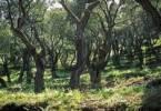 Thumbnail Olive grove in spring - Corfu - Greece