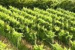 Thumbnail lookout Mondhalde at the Kaiserstuhl Baden-Württemberg Baden-Wuerttemberg Germany vineyards