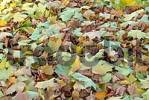 Thumbnail autumn foliage