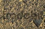 Thumbnail Desert floor