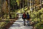 Thumbnail two boys eight and ten year old walking with day pack through the forest in autumn, Alpes, Austria