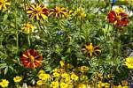 Thumbnail bed with marigold Tagetes