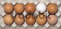 Thumbnail ten chicken eggs in their package, nine brown, one white