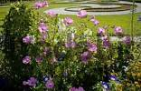 Thumbnail Garden of castle Charlottenburg with mallow silver cup Lavatera trimestris in the front