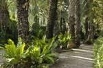 Thumbnail lane in the Palm grove, huerto del cura, Elx, Elche, Costa Blanca, Spain