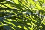 Thumbnail grass