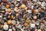 Thumbnail Seashells and pebbles