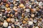 Thumbnail Seashells and pebbles