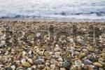 Thumbnail Stranded seashells, beach