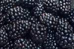 Thumbnail blackberries