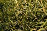 Thumbnail long grass in autumn