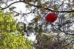 Thumbnail red balloon with postcard haengt between the Aesten of a tree, air mail, Germany