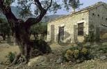 Thumbnail old house in a olive tree forest, Samothraki island, Thrakia, Greece