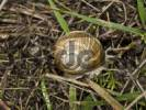 Thumbnail Burgundy- or Edible Snail Helix pomatia