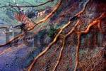Thumbnail e: Middle East Egypt Red Sea Gorgonian fan Coral Subergorgia sp -Digital Compositegt Lionfish, Pterois volitans