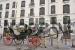 Thumbnail Horse and carriage, Ronda, Andalusia, Spain