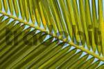 Thumbnail Palm frond, Indonesia, Asia