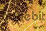Thumbnail Autumn foliage close-up