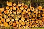 Thumbnail staple of cutten pine wood