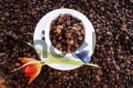 Thumbnail Coffee beans in a coffee cup and saucer, tulip