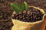 Thumbnail Linen sack filled with coffee beans atop a bed of coffee beans