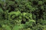 Thumbnail rainforest Maxwell Hill Malaysia