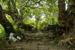 Thumbnail Steep stairs grown in old trees Wat Phu Champasak Laos