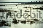 Thumbnail Mekong River Kompong Cham Cambodia